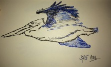 Pelican in Pen & Ink