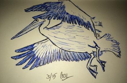 Pelican in Pen & Ink