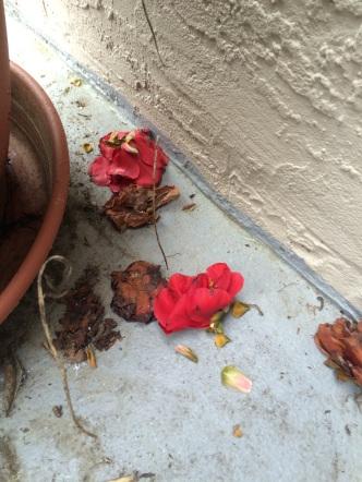 a flower fell