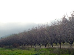 Orchards at California I-5