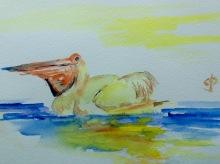 Pelican in Watercolour