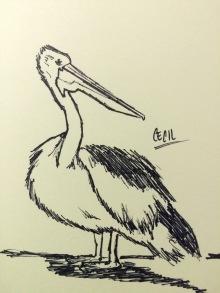 Pelicans in Pen