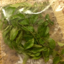 curry leaves just picked