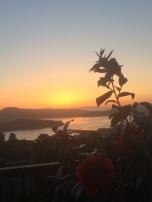 Sausalito Sunrise with my Camilias