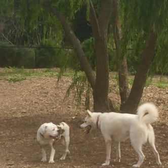 Dog Days 3