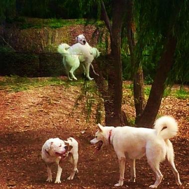 Dog Days_5507