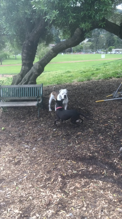 Secret of My SucCecil: Playing at the Dog Park