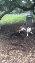 Dog Life_5203