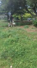 Dog Life_5209