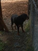 Dog Life_5227
