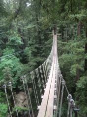 Secret of My SucCecil - Santa Cruz Zip Line: Mount Hermon Adventures
