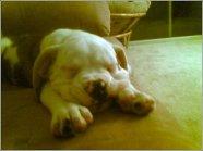 Puppy Taylor