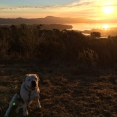 Secret of My SucCecil: September in Sausalito
