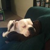 California Sleepy Taylor