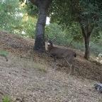 Taylor Meets Bambi