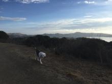 Secret of My SucCecil: Sausalito Sunrise 10-16-15