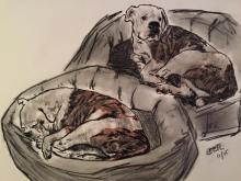 charcoal drawing of my dog