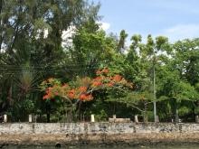 Fort Kochi 2