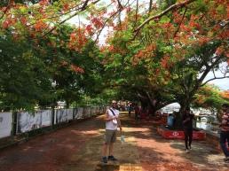 Fort Kochi 31
