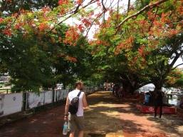 Fort Kochi 32