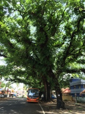 Fort Kochi 5