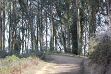 SCA Trail 11-20-15 0473