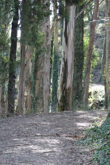 SCA Trail 11-20-15 0497