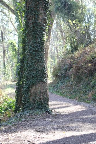 SCA Trail 11-20-15 0508