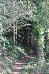 SCA Trail 11-20-15 0537