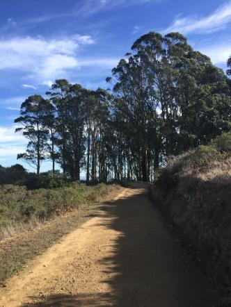 SCA Trail 7414