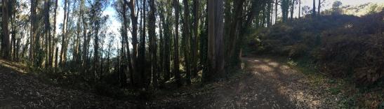 SCA Trail 7427