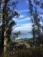 SCA Trail 7432