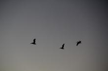 Sunrise on Bridgeway 10-29-15 9819