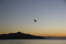 Sunrise on Bridgeway 10-29-15 9831