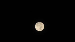 Full Moon on Christmas in Tampa