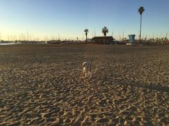 Taylor in Santa Barbara NYE_9210