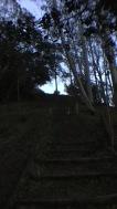 Fernwood at Night_9978