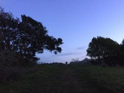 Fernwood at Night_9989