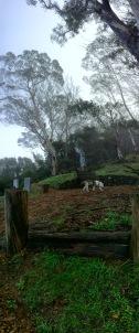 Fernwood Day Two 14