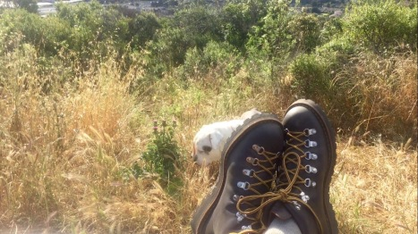 Hiking 5-26-16 14