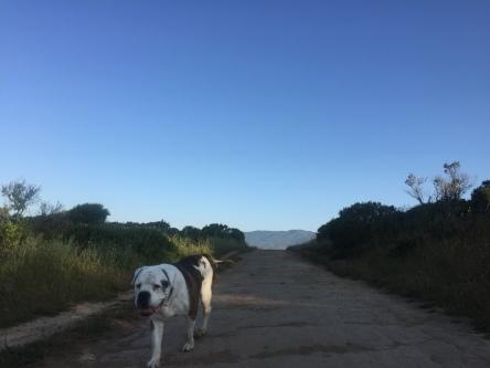 Hiking 5-16-16 _7095