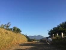 Hiking 5-16-16 _7109