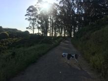 Hiking 5-16-16 _7135