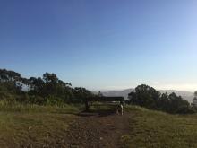 Hiking 5-16-16 _7141