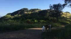 Hiking 5-16-16 _7185