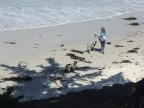 A Three-Legged Dog in Carmel